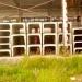 Продам Лоток ЛК 300-150-60 в Новозаполярном