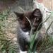 Отдам даром Милые, ласковые, игривые котята
