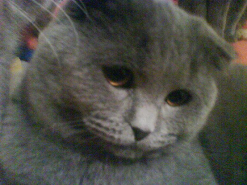 Продам кот для вязки