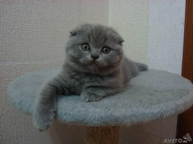 Продам котёнок