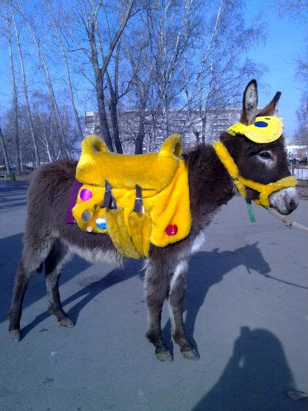 Продам осликов