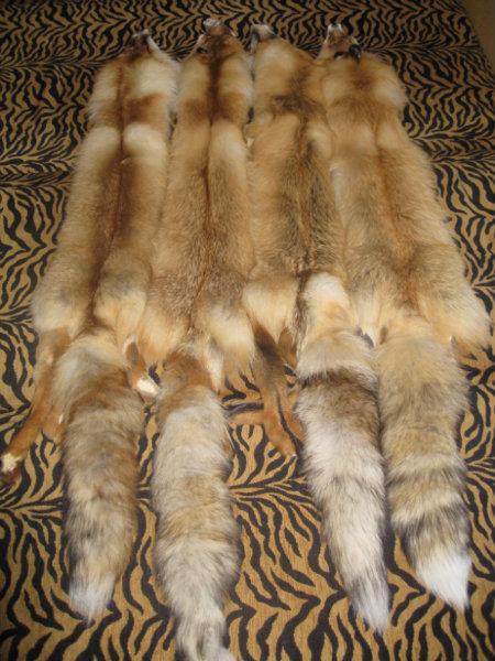 Продам продам шкуры рыжей лисы.