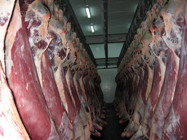Продам Постоянная поставка мяса