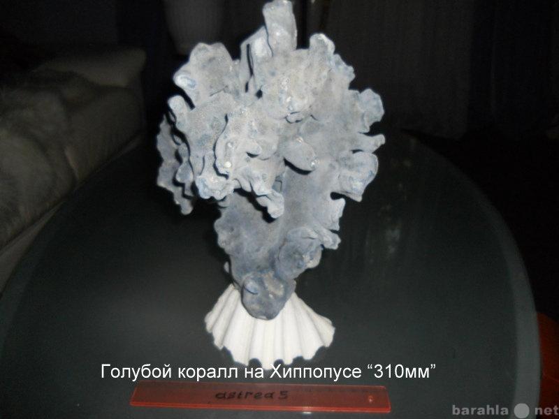Продам голубой коралл