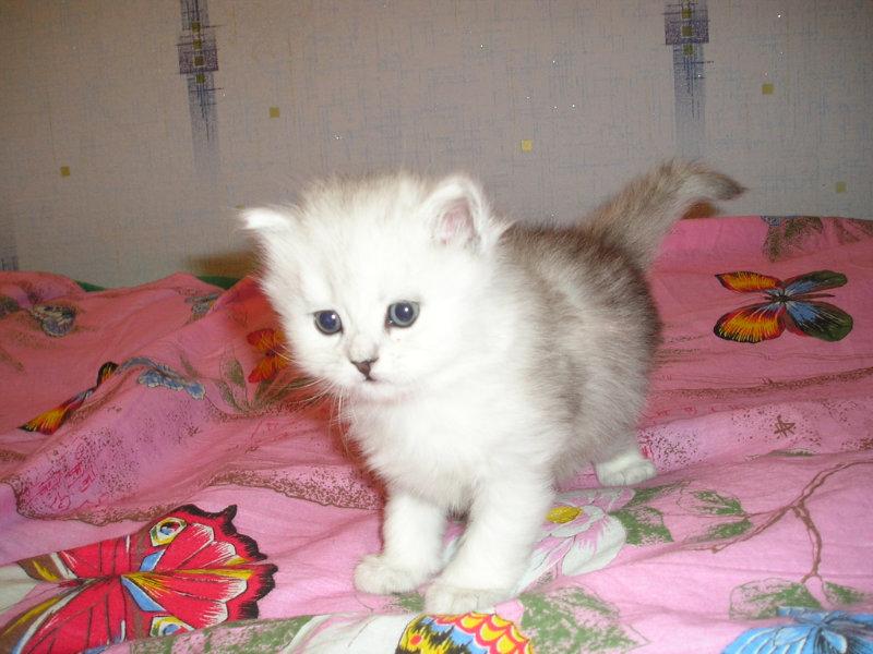 Продам: очаровательного котёнка