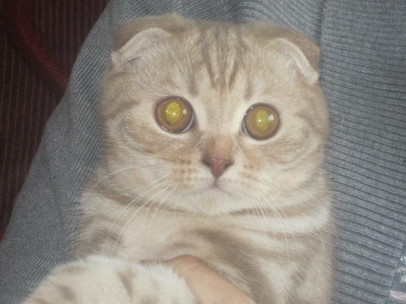 Продам котенок