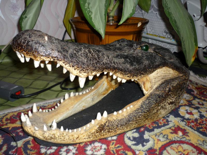Продам: Голову крокодила