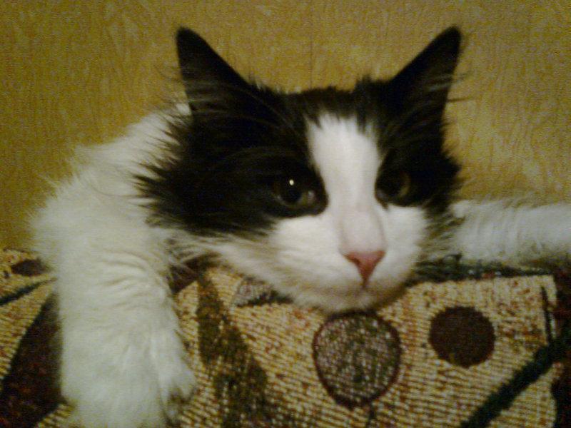 Отдам даром: Кот Матвей