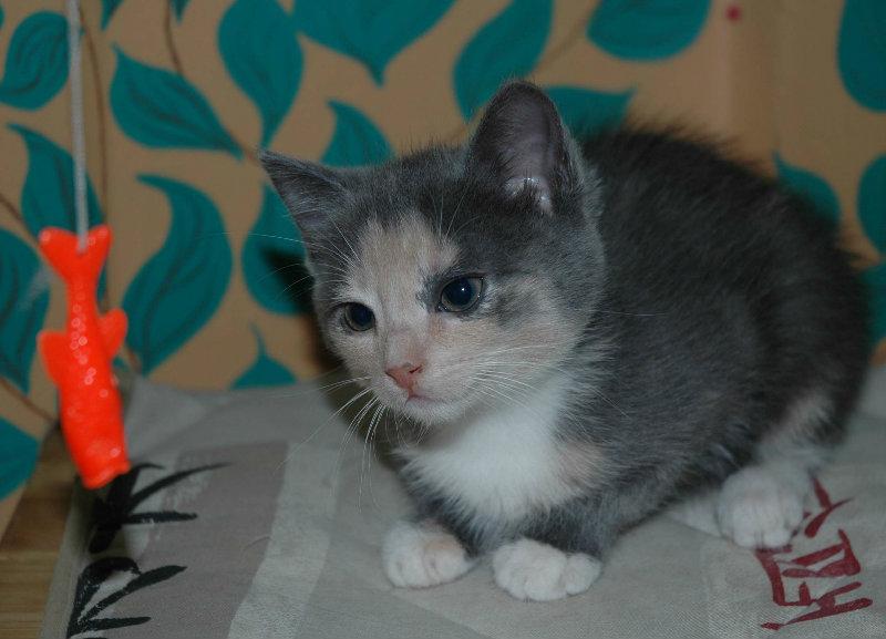 Отдам даром: Котята Девочки
