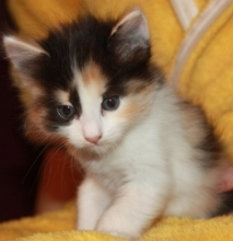 Отдам даром Очаровательные котята в дар