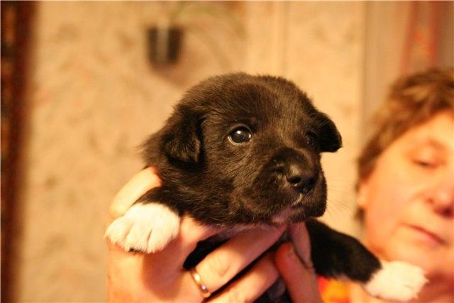 Отдам даром: Небольшой щенок в хорошие руки!