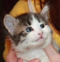 Отдам даром: Очаровательные котятки в дар