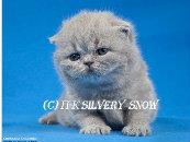 Продам Британские котята из питомника британцев