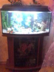 Продам Аквариум с рыбками и специальная тумба