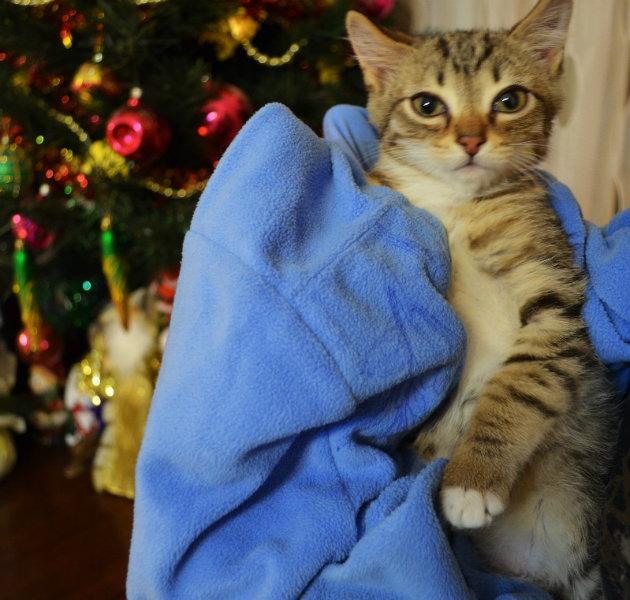 Отдам даром Отдам в хорошие руки котенка