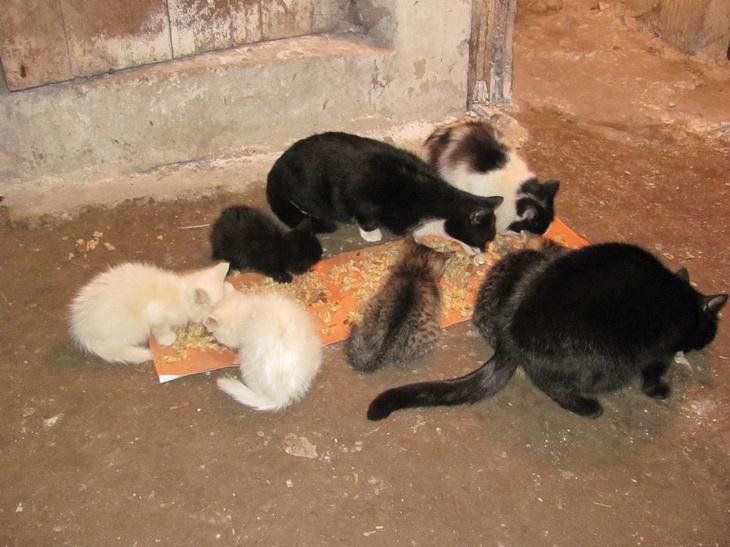 Отдам даром Кошки молодые стерелизованые разные