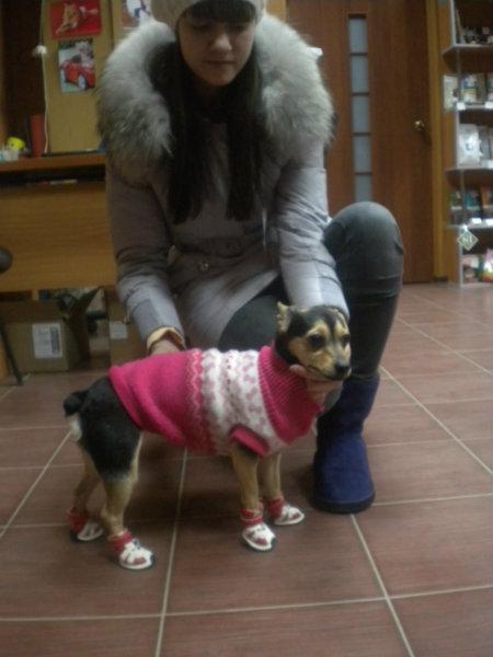 Продам: Одежда и аксессуары для животных из США
