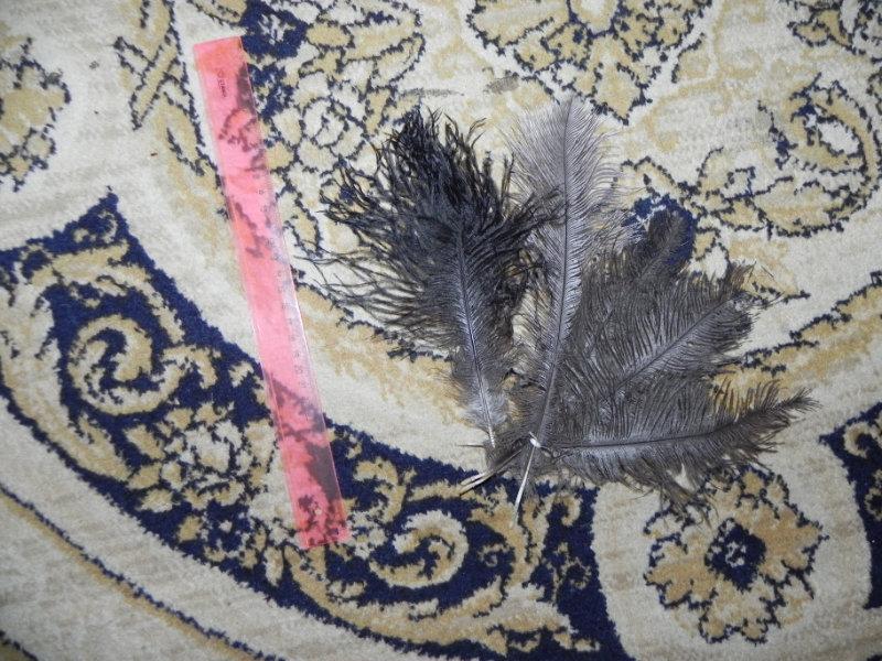 Продам Страусиные перья
