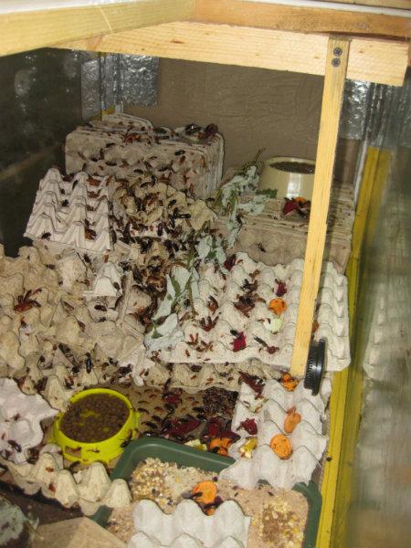 Продам Кормовые насекомые для цихлид