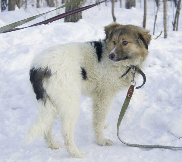 Продам вэнди-чудо щенок