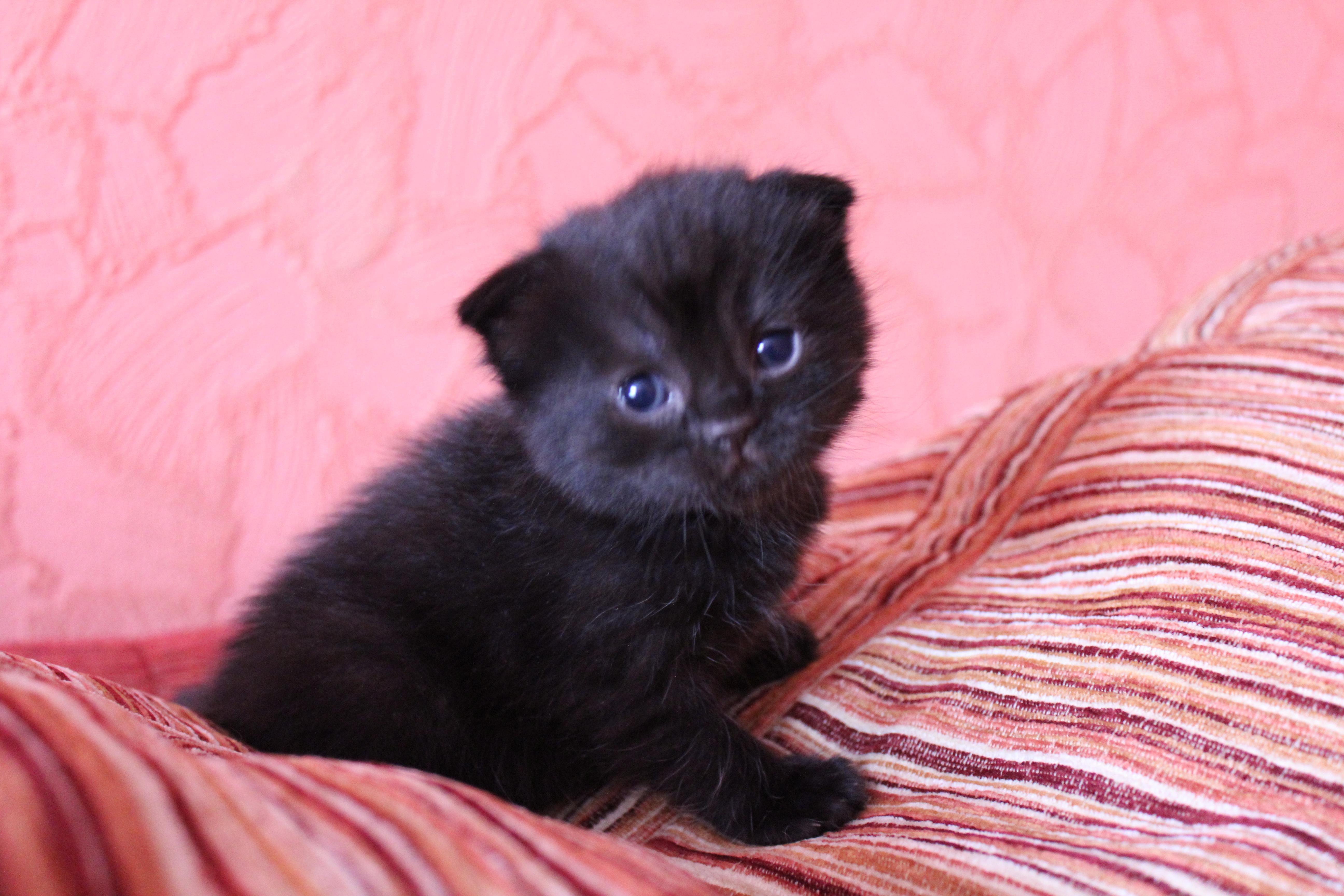 Котята уфа в дар фото