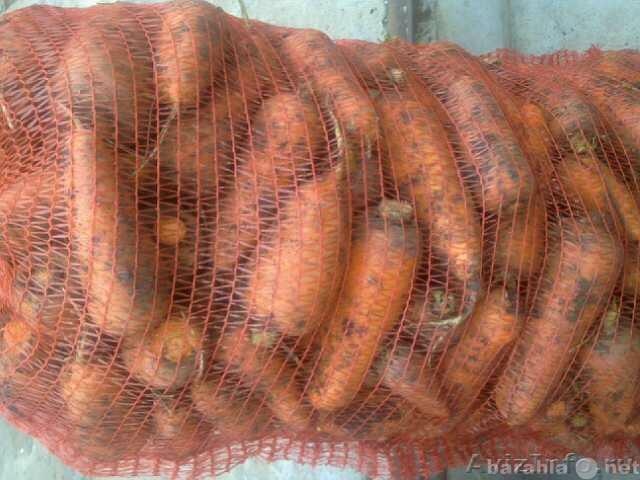 Продам Продам Морковь оптом