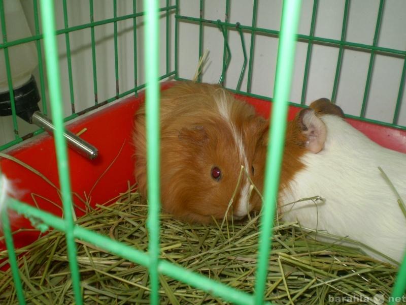 Продам Аквариумичстика, животные, корма, клетки