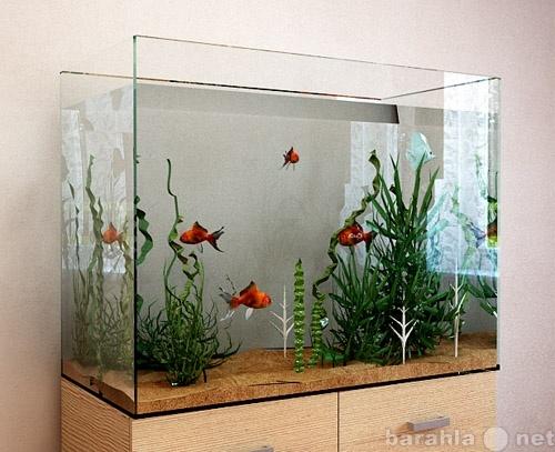 Продам Аквариумистика, рыбки