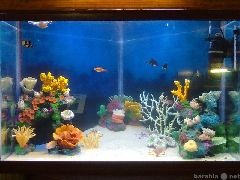 Продам искусственные кораллы
