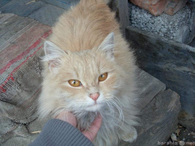 Отдам даром Пушистый красивый котенок