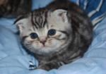 Приму в дар приму котенка