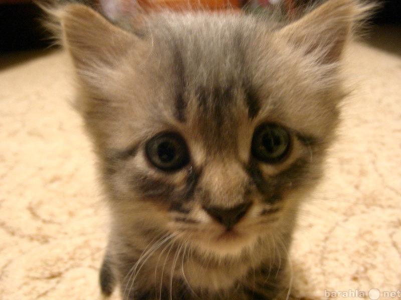 Отдам даром котенка в хорошие руки