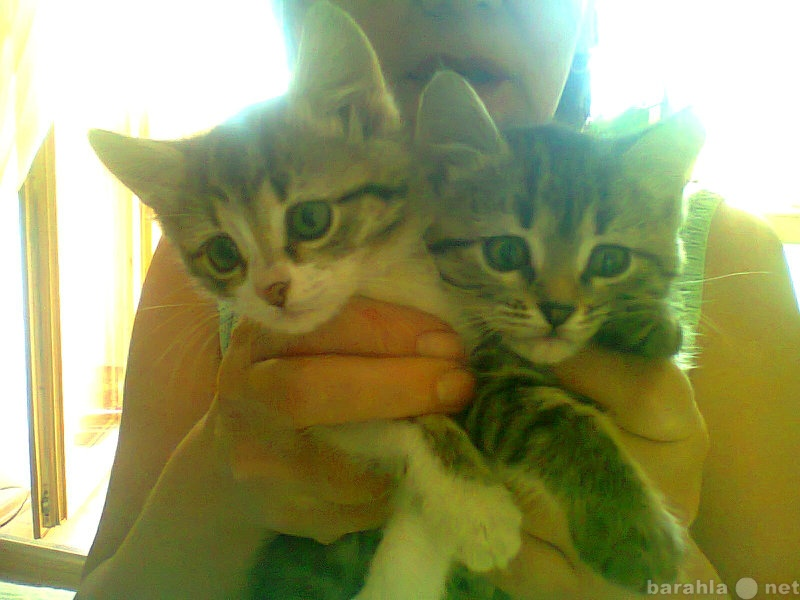 Отдам даром милые котята