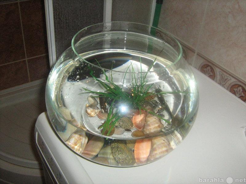 Продам аквариум с сомиком