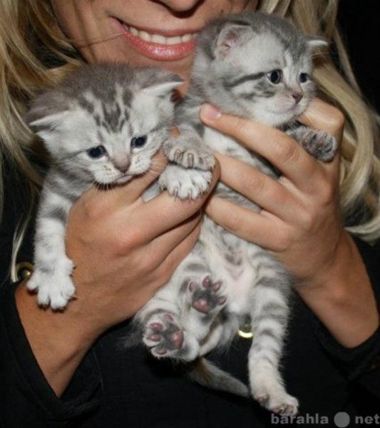 Продам Вискас (рекламные котята)