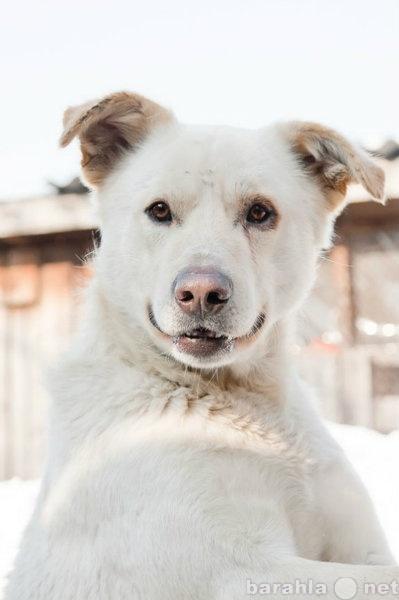 Отдам даром Самый лучший Пес ждет вас!