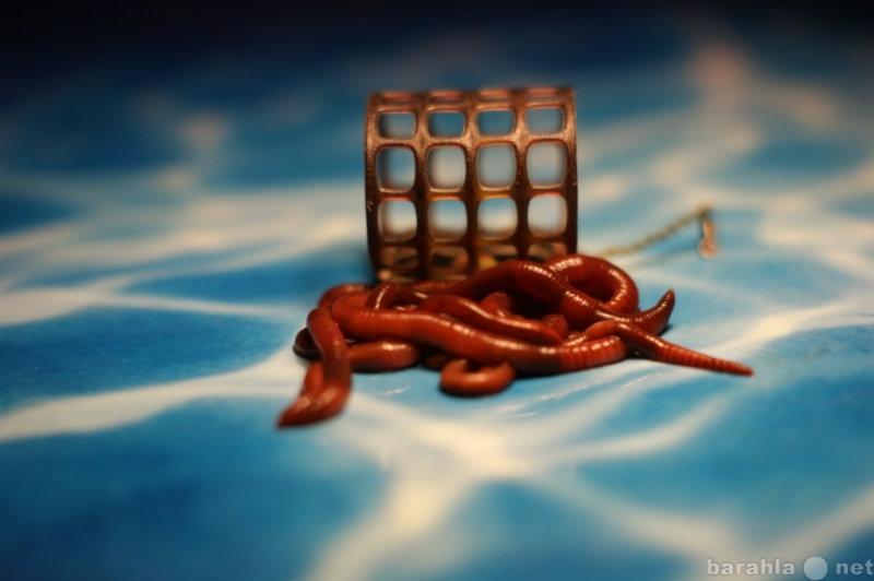 Продам Деликатесный червь для рыбалки