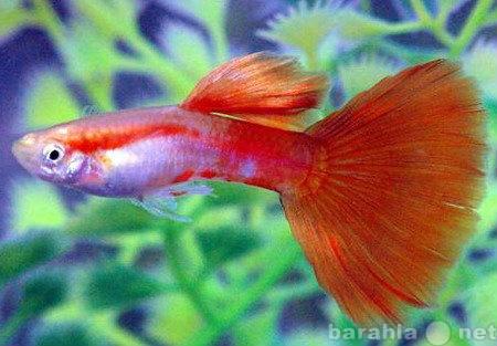 Продам рыбки и растения