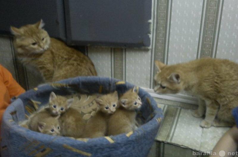 Отдам даром Отдам даром рыжих котят!!!