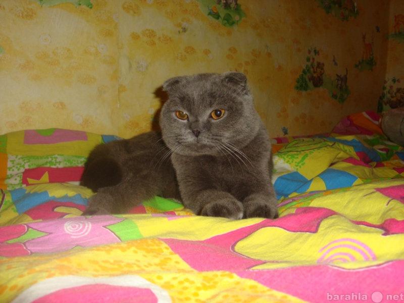 Продам британский котик познакомится