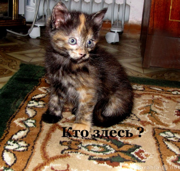 Отдам даром Отдам чудесных котят!