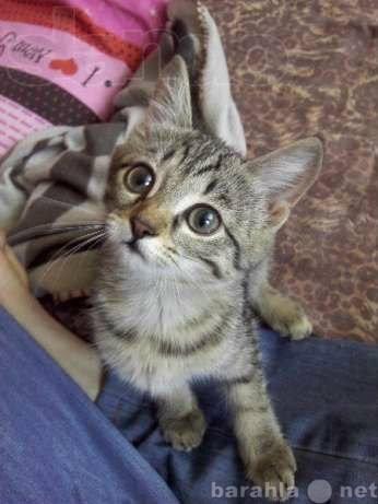 Отдам даром Маленькая полосатая котейка