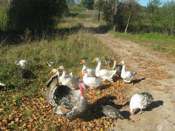 Продам Деревенская еда от фермера