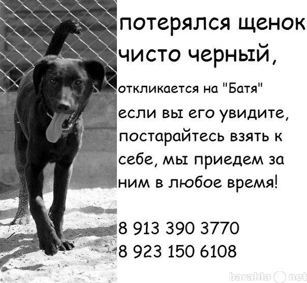 """Куплю ПОТЕРЯЛСЯ черный щенок-""""Батя""""!"""