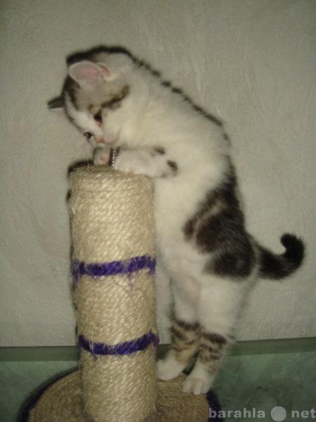 Продам Продам породистых котят