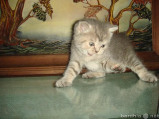 Продам Продам котенка (девочка). Окрас ВИСКАС!