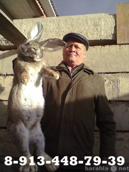 Продам: кролики Саяногорск