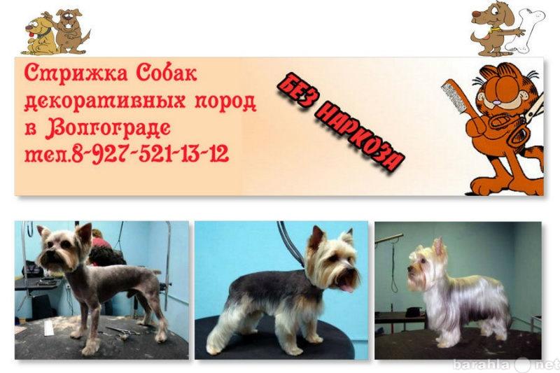 Продам Продам стрижка собак