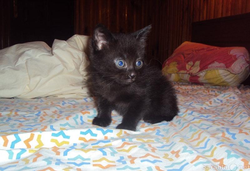 Отдам даром Очаровательный котенок