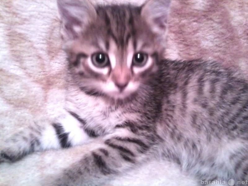 Отдам даром Очаровательные котята в ДАР!